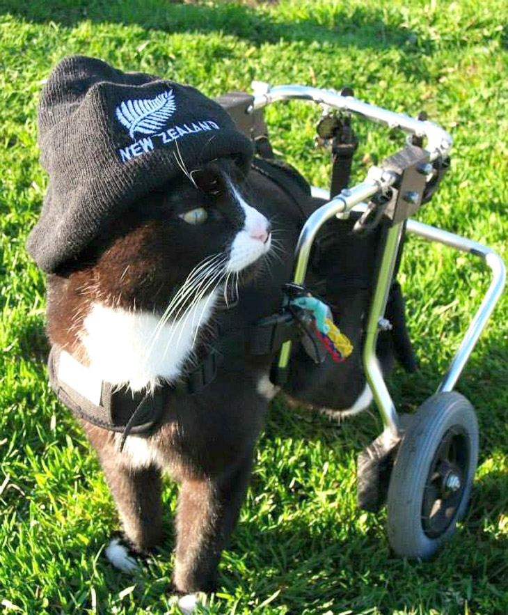 Очаровательный одноглазый кот