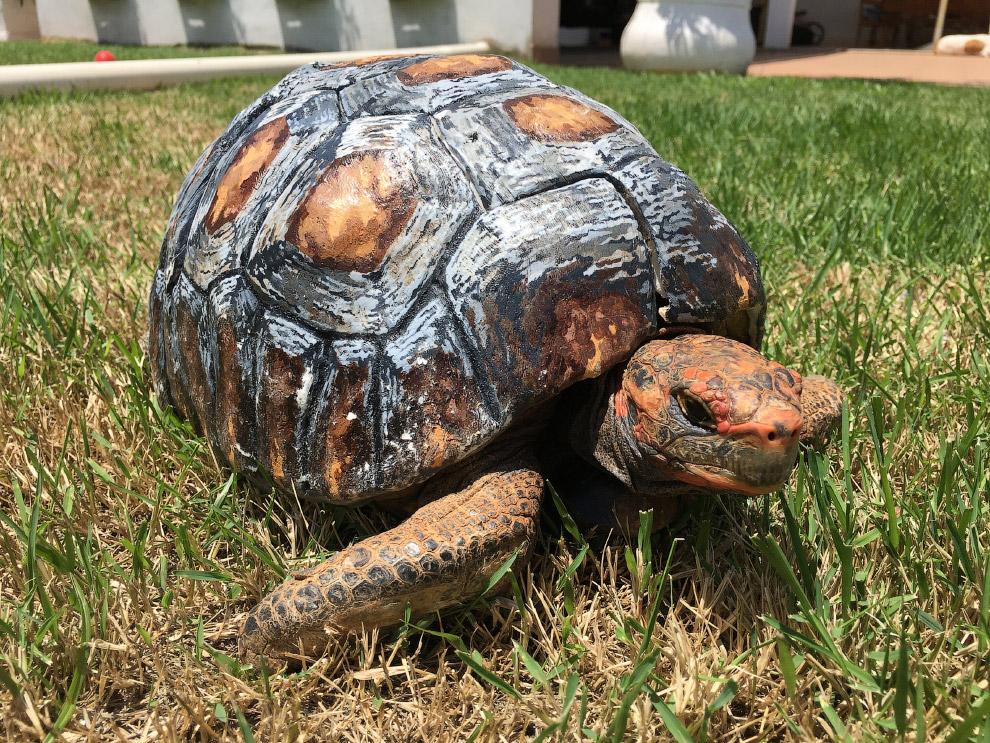 В 20015 году была найдена черепаха, чей панцирь сильно пострадал при пожаре