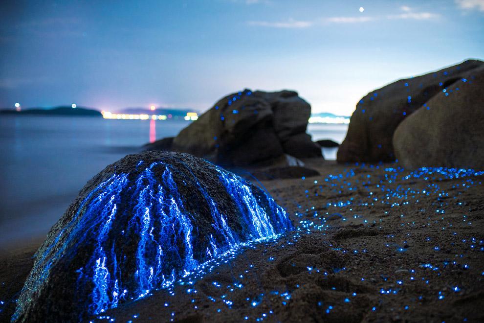 02s Волшебное свечение у берегов Японии