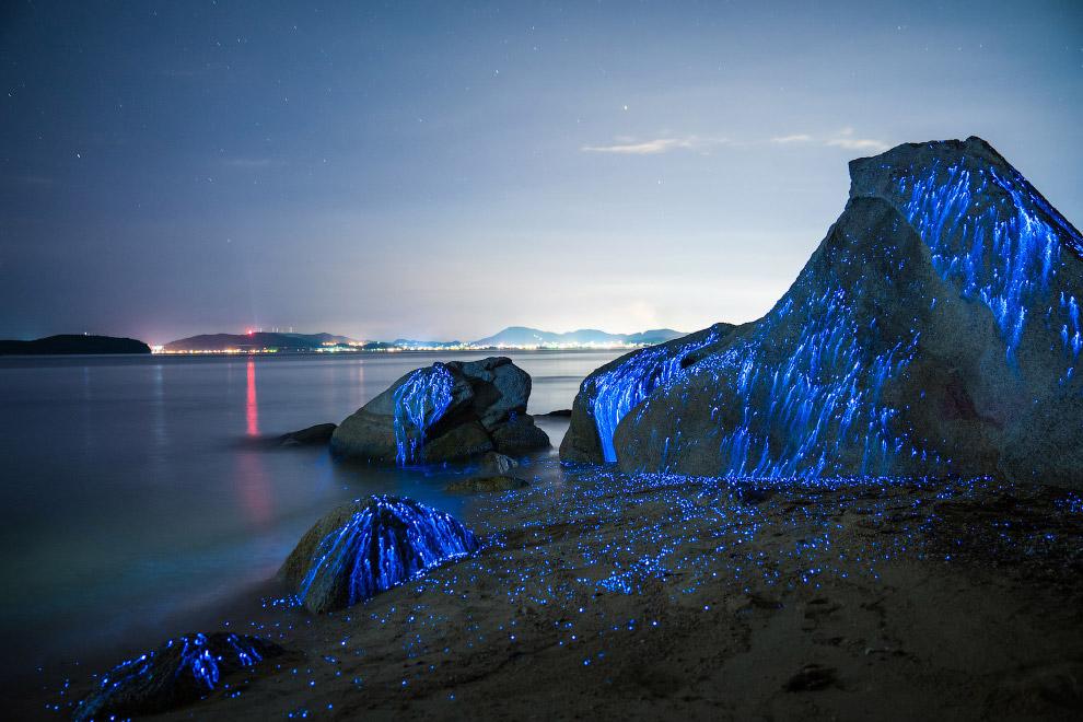 06s Волшебное свечение у берегов Японии