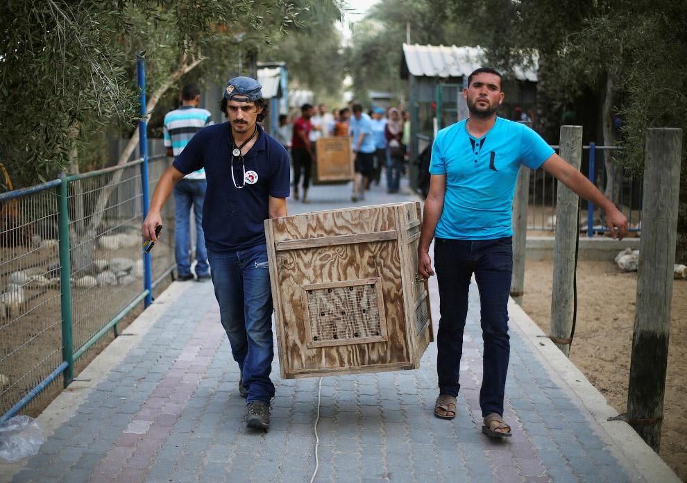 Эвакуация животных из зоопарка в Газе