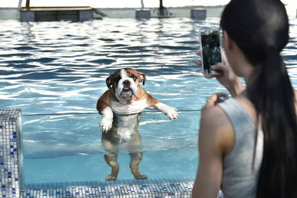 13 Животные в фотографиях