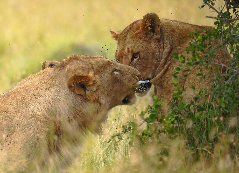 15 Животные в фотографиях
