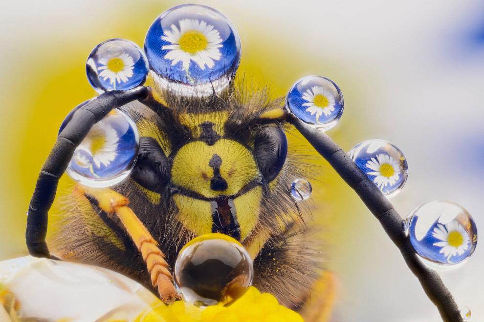 Позитивная пчела с украшениями из капель