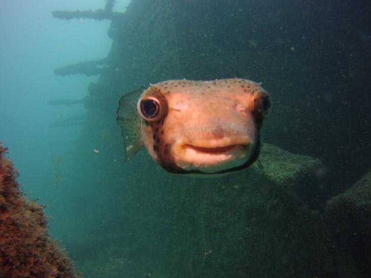Счастливая рыба