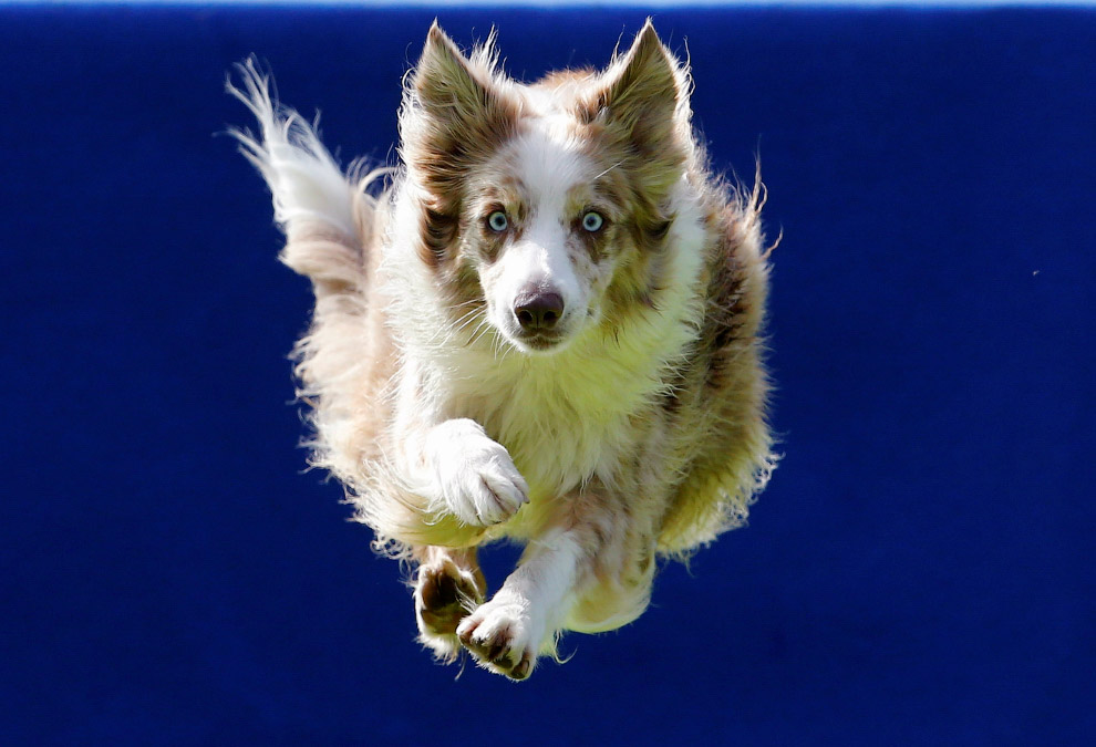 Flying Dogs Competition in Slovenia