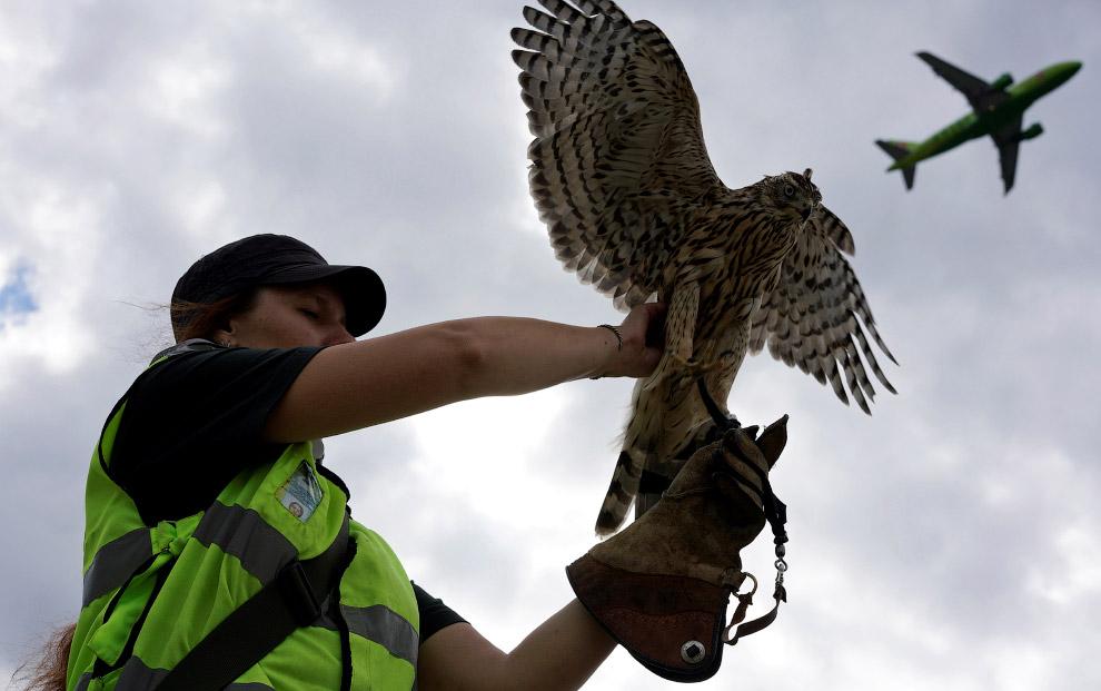 Орнитологическая служба аэропорта