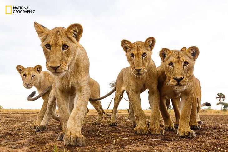 National Geographic: лучший природный фотограф года