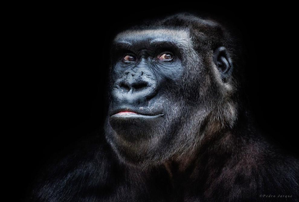 02s Портреты диких животных