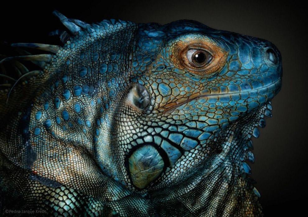03s Портреты диких животных