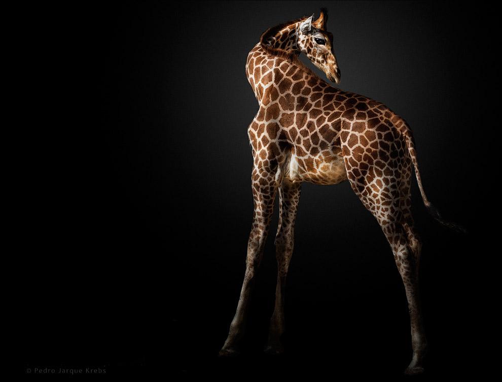 04s Портреты диких животных