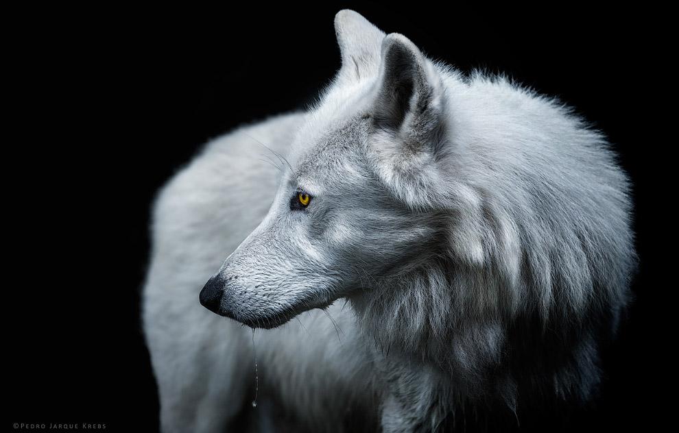 08s Портреты диких животных