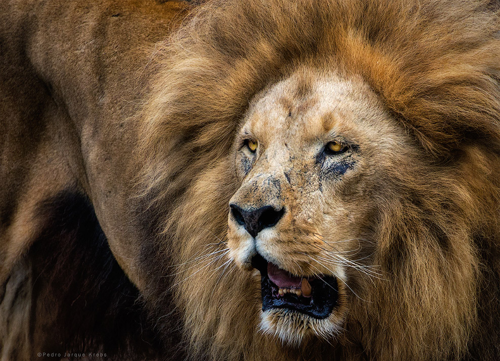 09s Портреты диких животных