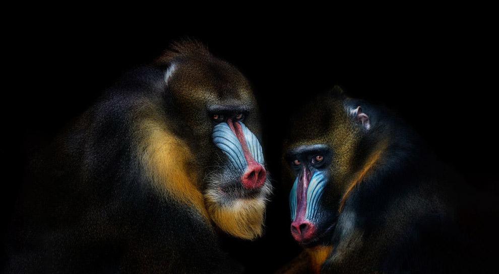 10s Портреты диких животных