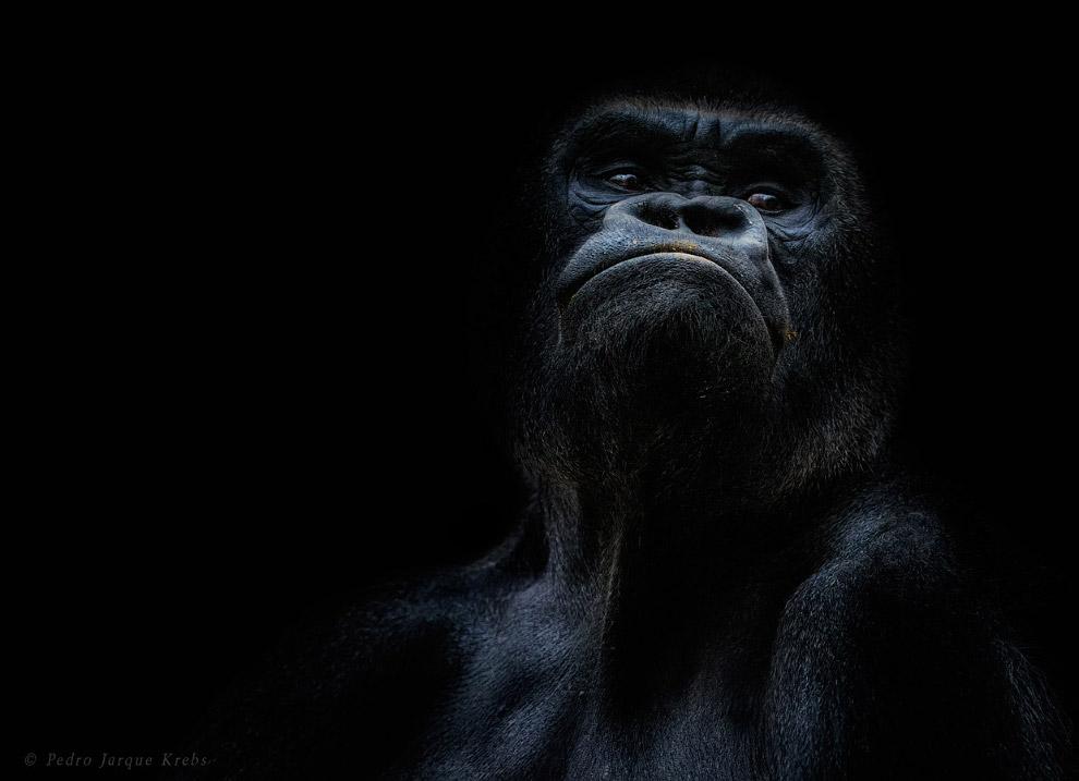 11s Портреты диких животных