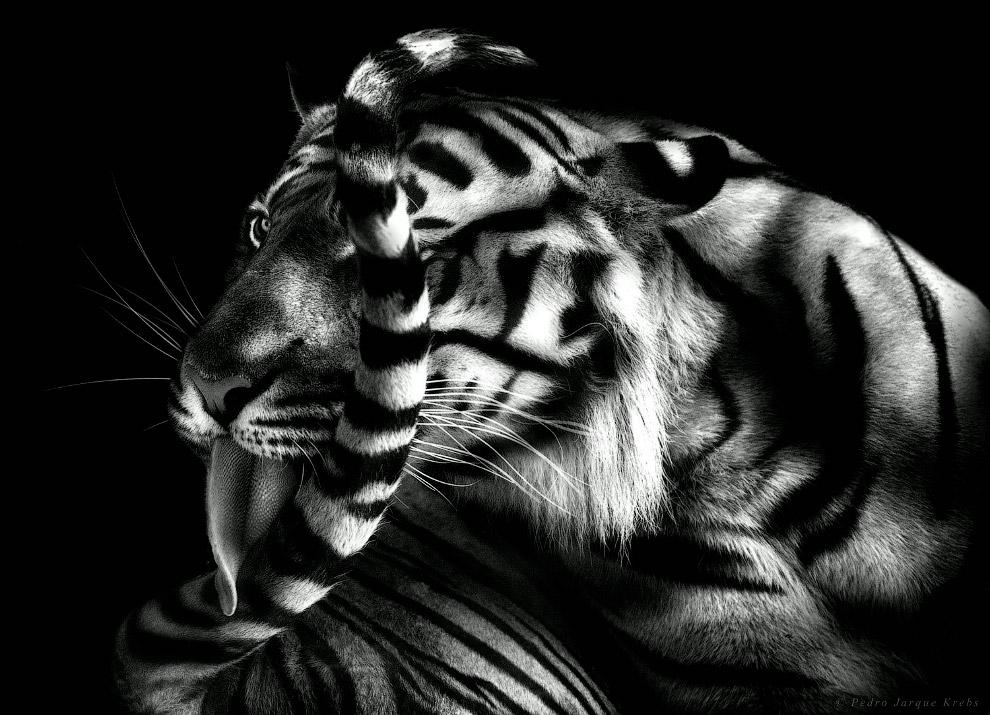 16s Портреты диких животных