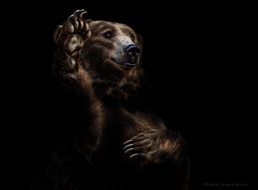 17s Портреты диких животных