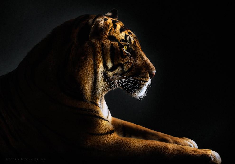 19s Портреты диких животных