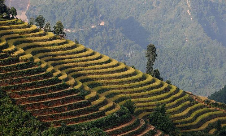 Рисовые террасы во вьетнамской провинции Йенбай