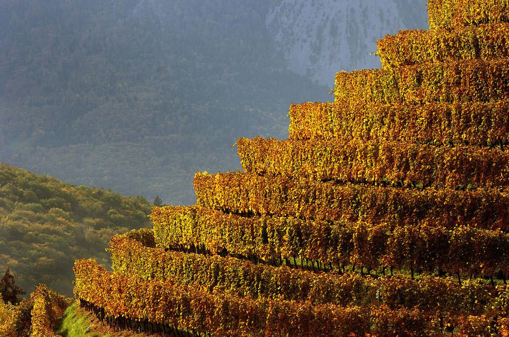 Террасы-виноградники в долине Роны в Швейцарии