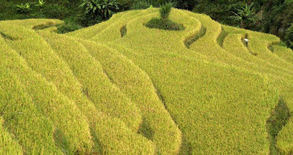 Террасы в северо-западу от Ханоя
