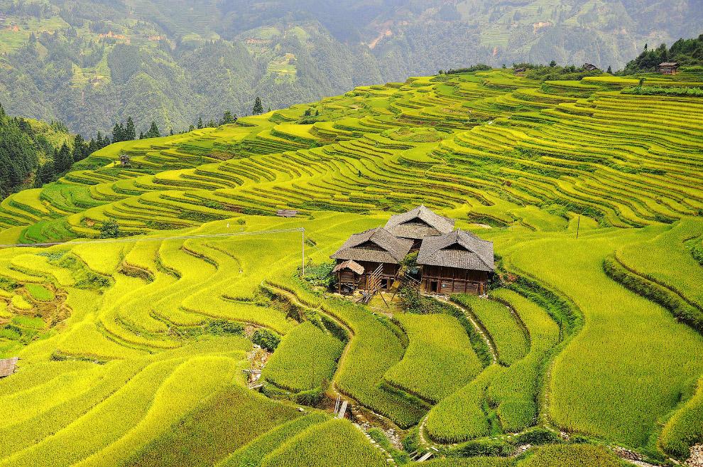 Живописные террасы в деревне Dangniu, Китай