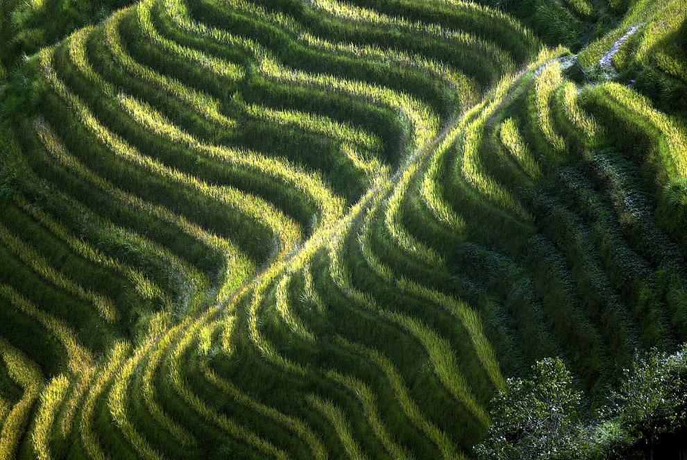 Мохнатые рисовые террасы на юго-западе провинции Гуанси в Китае