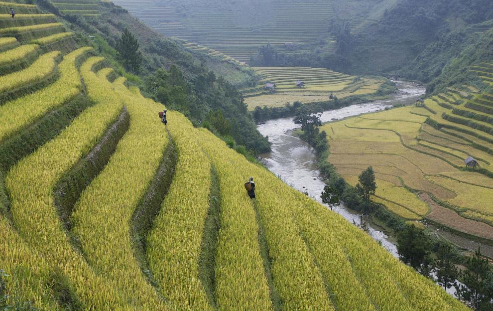 Фермеры на рисовых террасах во Вьетнаме