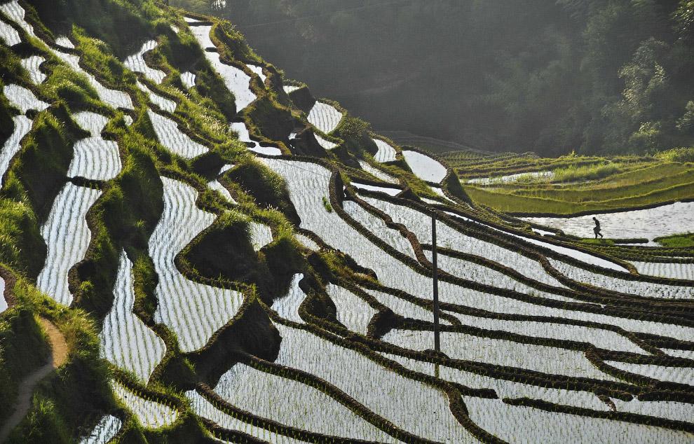 Сбор урожая в северной горной провинции Йенбай