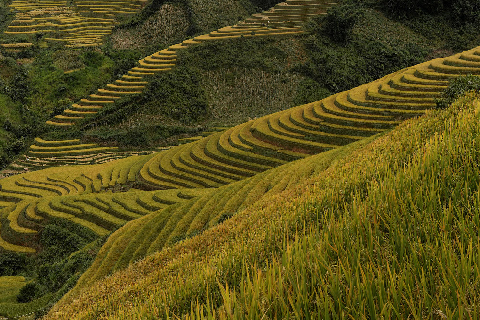 Террасы в северной горной провинции Йенбай, Вьетнам