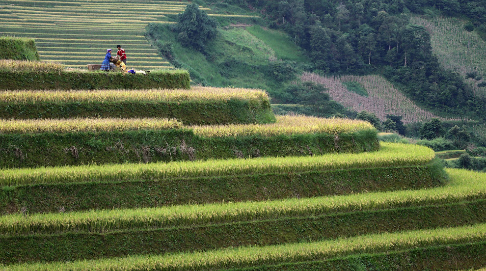 Мохнатые террасы в северной горной провинции Йенбай, Вьетнам
