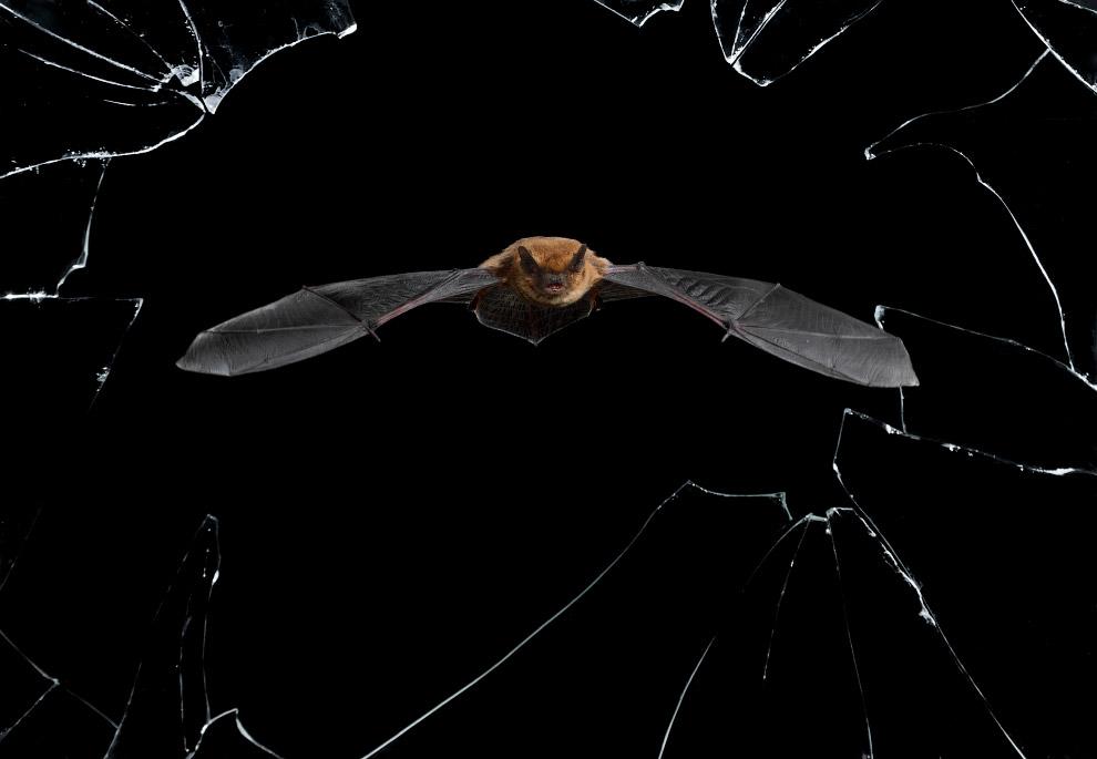 Летучая мышь и осколки стекла в заброшенном доме в Саламанке, Испания, где находится их гнездо