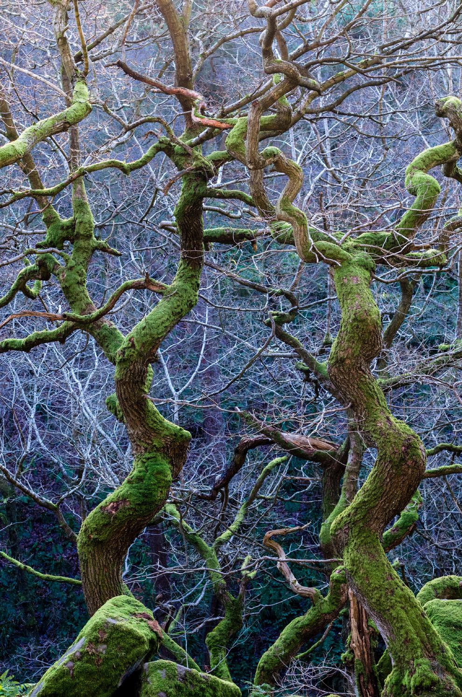 Дикие леса в Дербишире, Англия