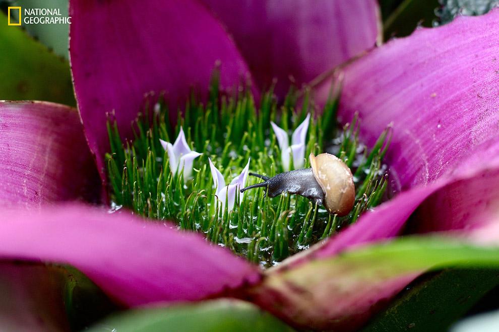 Улитка на цветке
