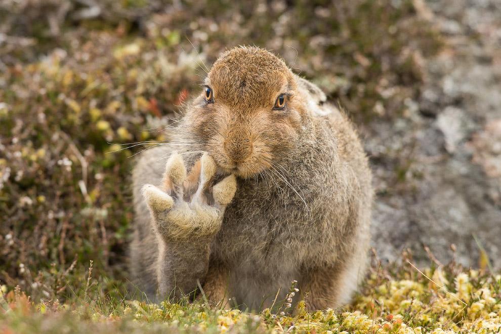 Дружелюбный заяц