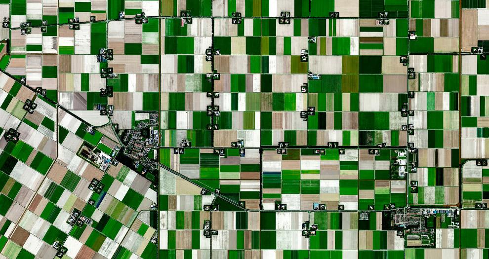 Фермы в Нидерландах, которые выращивают цветочные луковицы