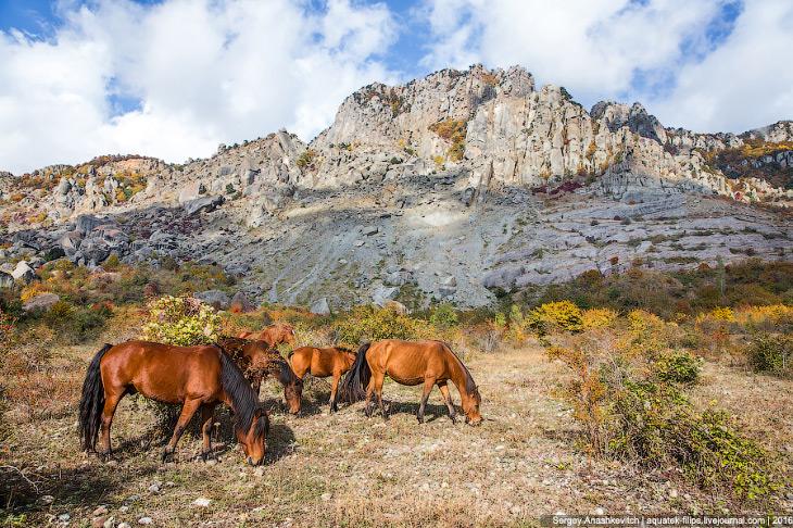 Подножие горы Демерджи и мои любимые лошади.