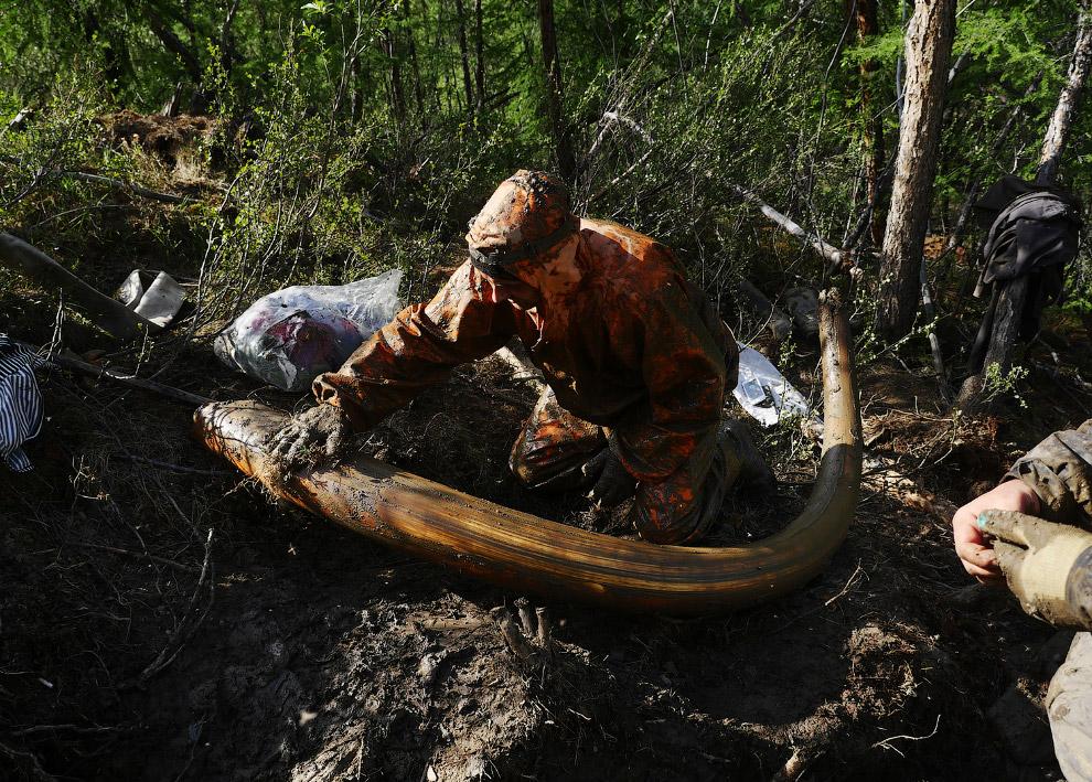 Охотники за мамонтами