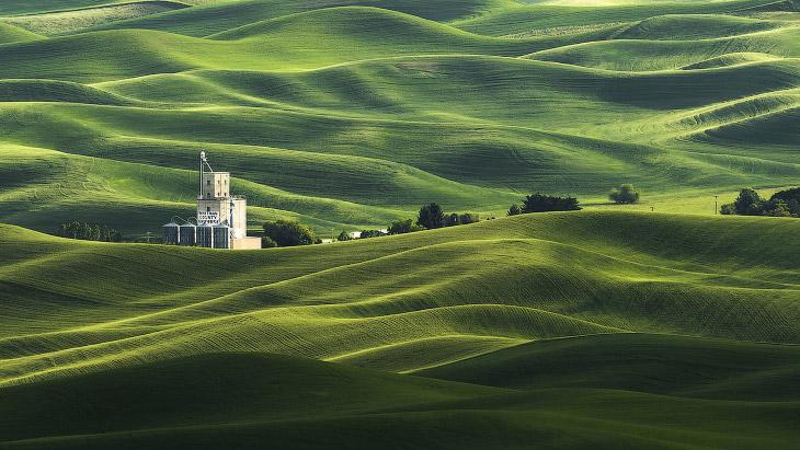 Зеленые поля пшеницы в Palouse регионе штата Вашингтон