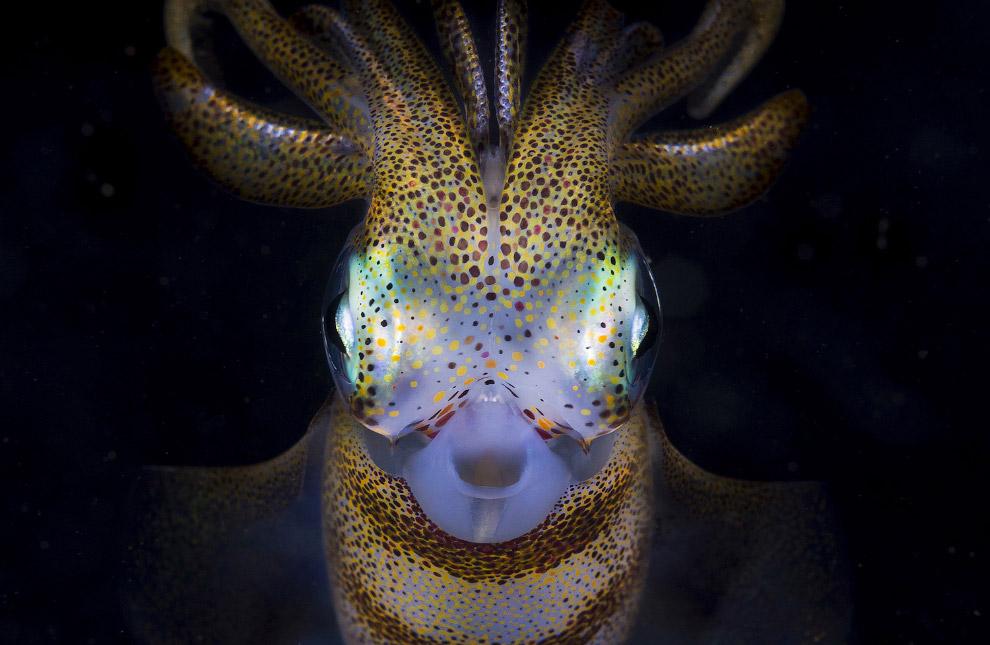 кальмар