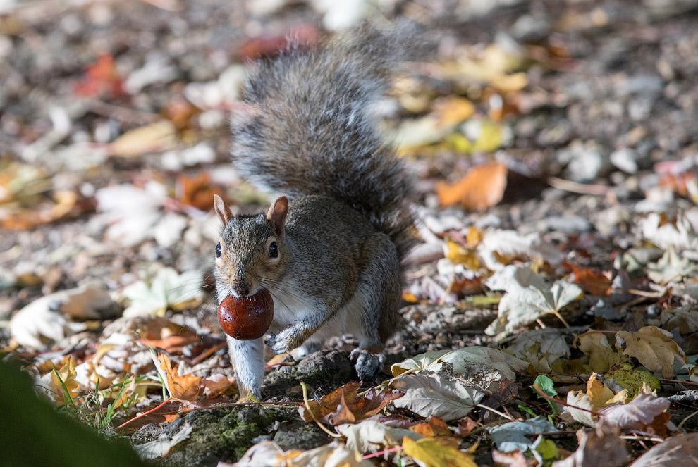 Умнейшее существо – белка – делает запасы на зиму
