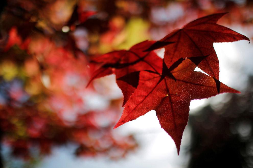 Осенние листы на западе Франции