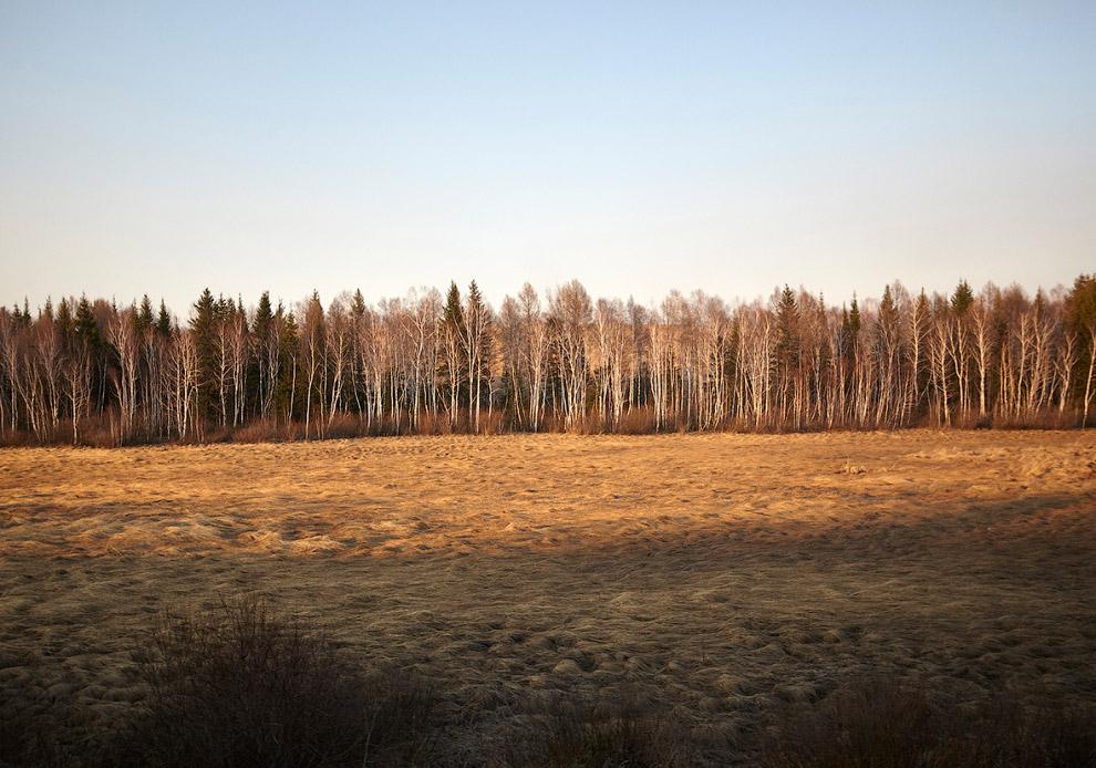 Российская природа. Березки