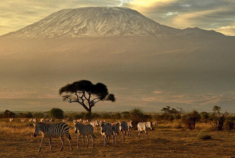 фото национального парка килиманджаро