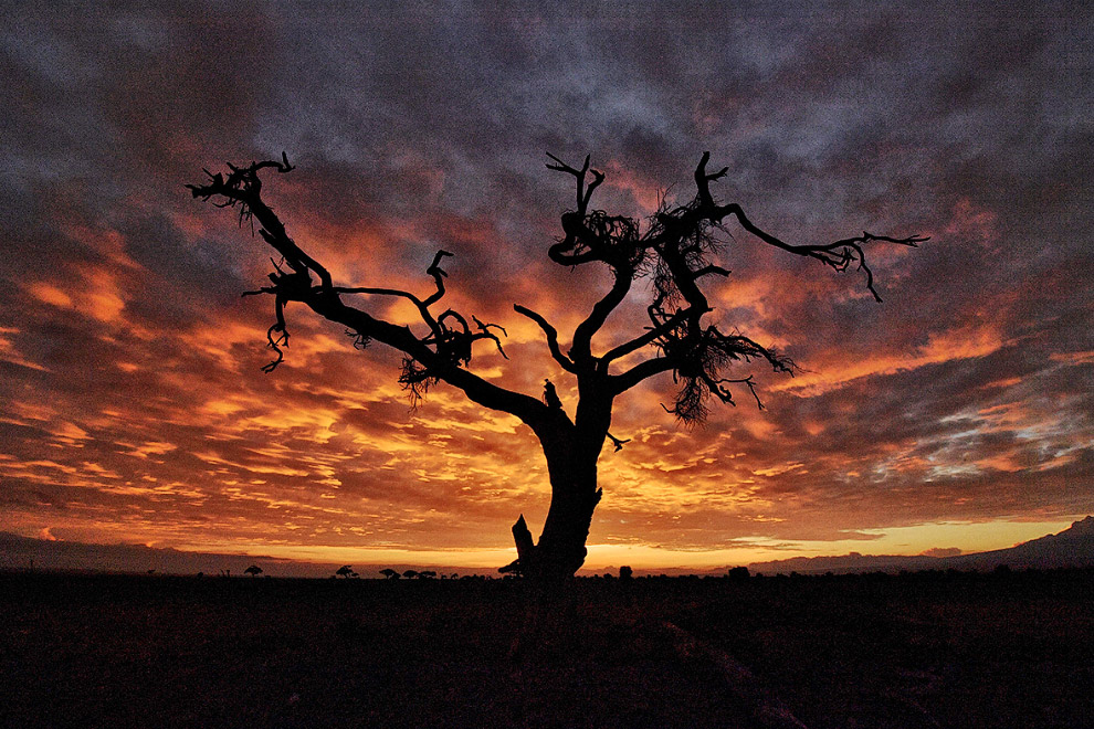 Национальном парке Амбосели