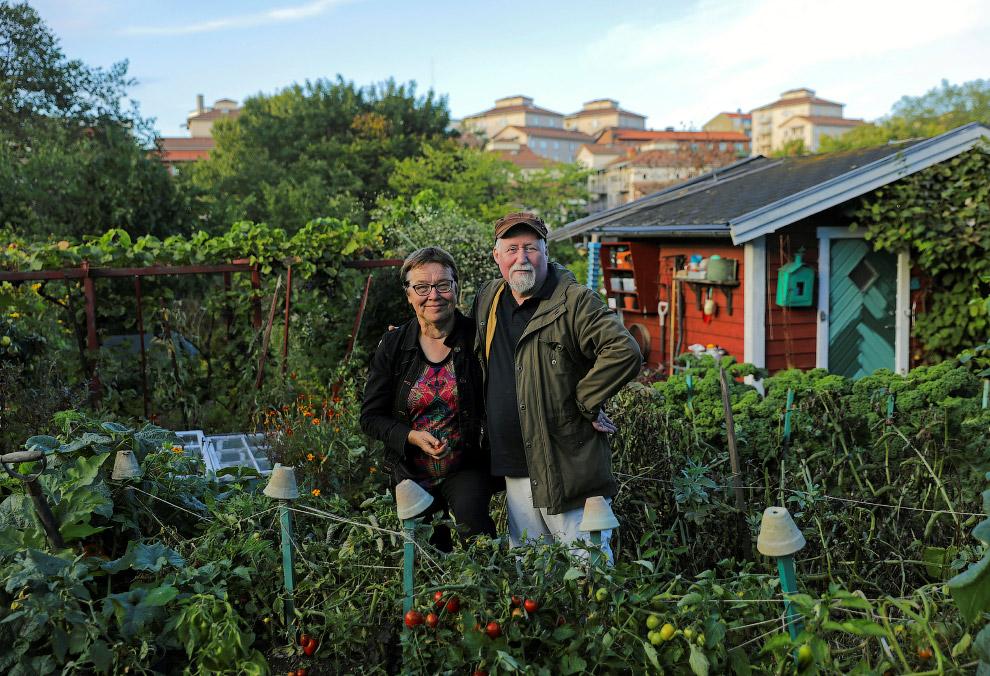 Огород в городе