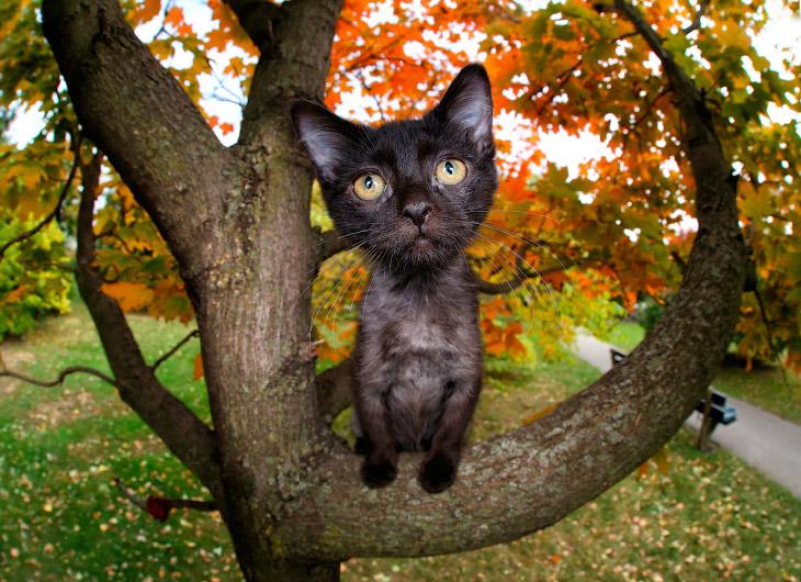 Игривые коты от Сета Кастиля