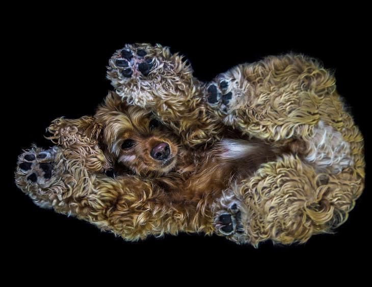 Необычный взгляд на собак