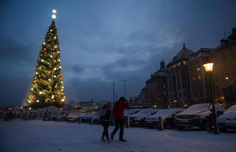 Новогодняя елка в Стокгольме
