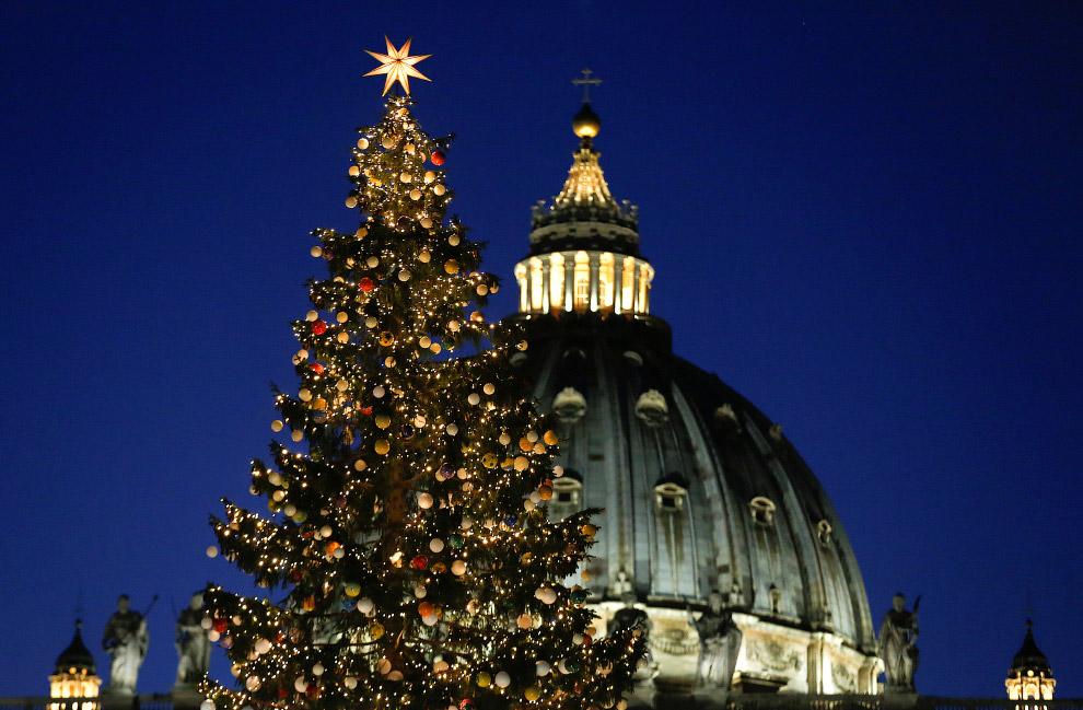 Ватикан поставил у себя на площади Святого Петра рождественскую елку